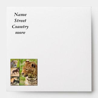 wild cats envelopes
