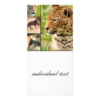 wild cats personalized photo card