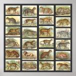 Wild Cats Print