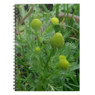 Wild chamomille, Matricaria matricarioides Notebooks