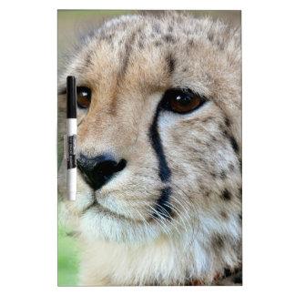 Wild Cheetah Dry Erase Whiteboards