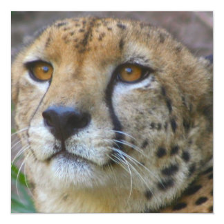 Wild Cheetah Invitations