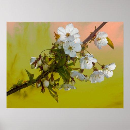 Wild Cherry Blossom Print