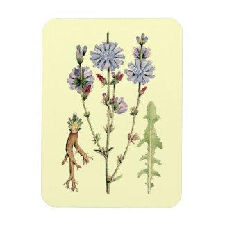 Wild Chicory Rectangular Photo Magnet