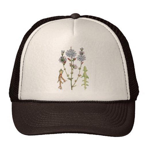 Wild Chicory Trucker Hat