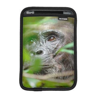 Wild Chimpanzee (Pan Troglodytes) Looking iPad Mini Sleeve