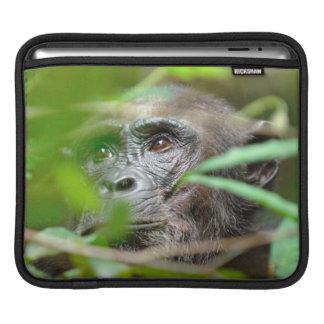 Wild Chimpanzee (Pan Troglodytes) Looking iPad Sleeves
