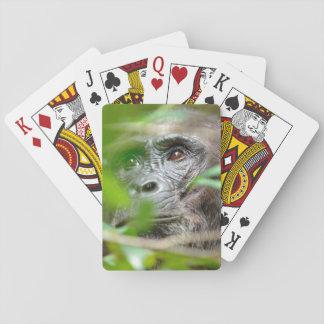 Wild Chimpanzee (Pan Troglodytes) Looking Card Deck
