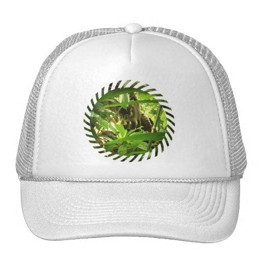 Wild Coati Baseball Hat