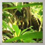 Wild Coati Photo Print