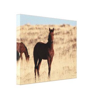 Wild Colt Canvas