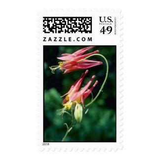 Wild Columbine (Aquilegia Canadensis) flowers Stamp