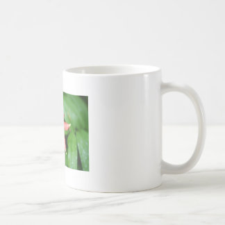 Wild Columbine Classic White Coffee Mug