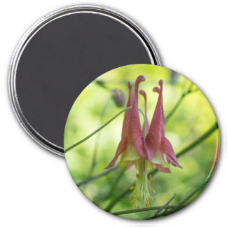 Wild Columbine Red Wildflower Round Magnet