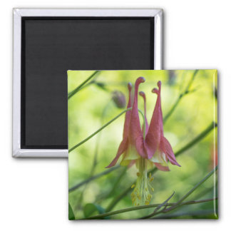 Wild Columbine Red Wildflower Square Magnet
