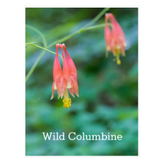 Wild Columbine Red Wildflowers Name Postcard