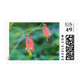Wild Columbine Red Wildflowers Postage Stamps