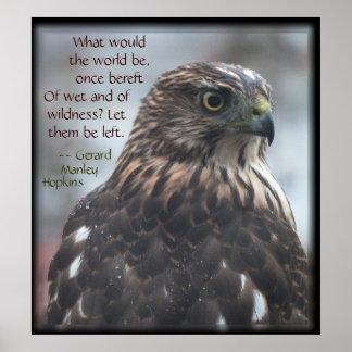 Wild Cooper s Hawk Poster