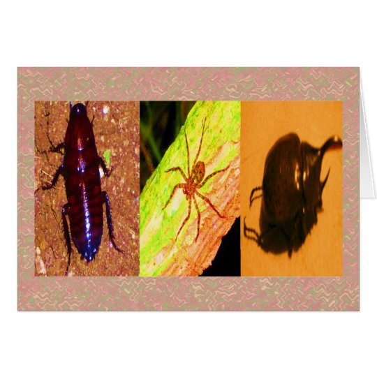 Wild Costarica - Spiders, Cockroaches and Insects Card