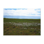 Wild cotton meadow canvas stretched canvas print