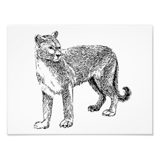 Wild Cougar Sketch Photographic Print