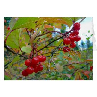 Wild Cranberries Card