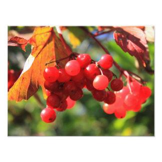 Wild Cranberries Photographic Print