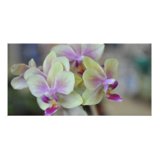 Wild cream orchids custom photo card