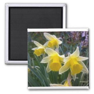 Wild Daffodils Magnet