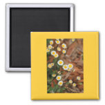 Wild Daisies Magnets