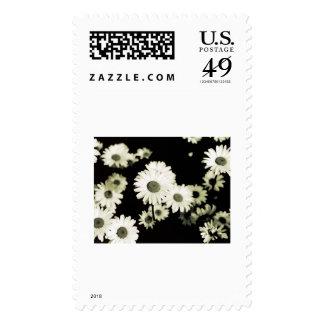 Wild Daisies taken on Mackinac Island Michigan Stamp
