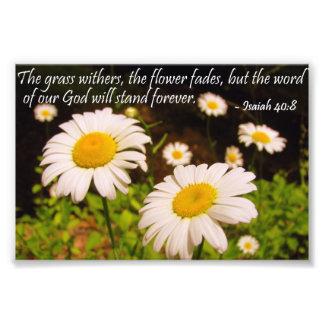 Wild Daisies with Isaiah 40:8 Photo Print