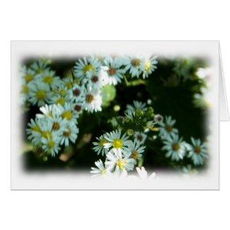 Wild Daisy Fleabane Flower Blank Cards