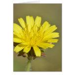 wild daisy greeting cards