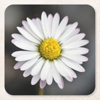 Wild Daisy White and Yellow Square Paper Coaster