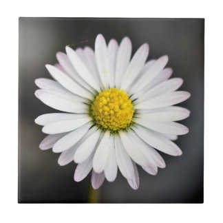 Wild Daisy White and Yellow Tile