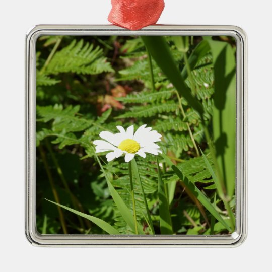 Wild Daisy with Ferns Metal Ornament