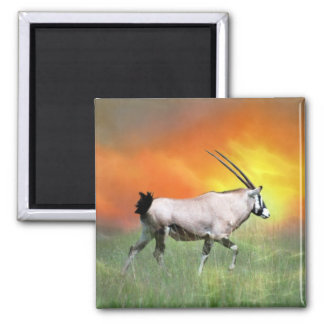 Wild deer at sunset fridge magnets