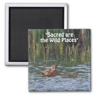 Wild Deer Fawn Wilderness Gift Magnets zazzle_magnet