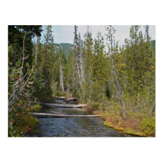 Wild Deschutes River, Oregon Postcard