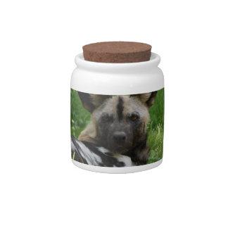 Wild Dog Photo  Candy Jar