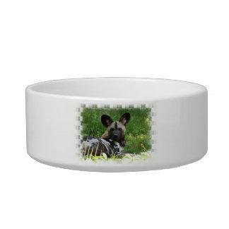 Wild Dog Photo  Pet Bowl