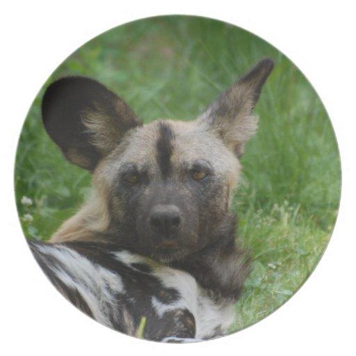 Wild Dog  Plate