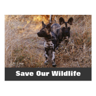 Wild Dogs Save Our Wildlife Postcard