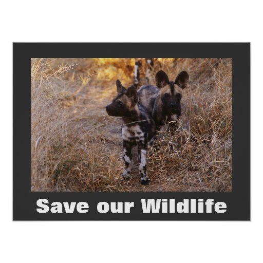 Wild Dogs Save Our Wildlife Poster  Zazzle