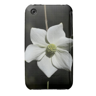 Wild Dogwood Bloom in Yosemite iPhone 3 Case-Mate Cases
