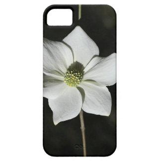 Wild Dogwood Bloom in Yosemite iPhone SE/5/5s Case