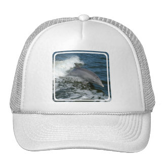 Wild Dolphin Baseball Hat