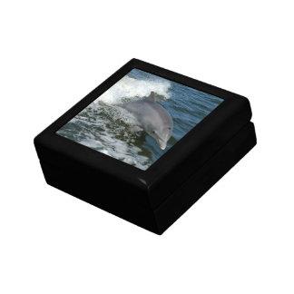 Wild Dolphin  Gift Box