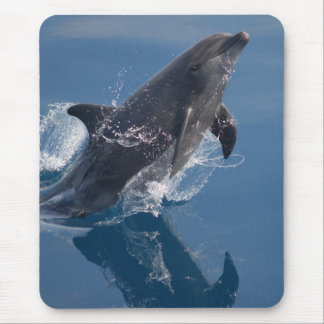 Wild dolphin mouse pad